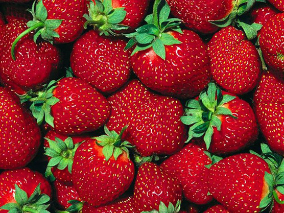 Paulridge Berry Farm Featured Image