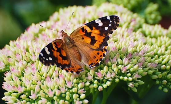 ButterflyfrontgardensandEthansvisitAug062012074-(1)