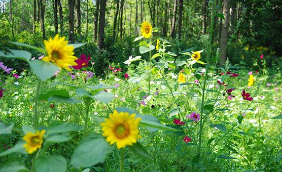 WildflowergardenAugust2010020-(1)