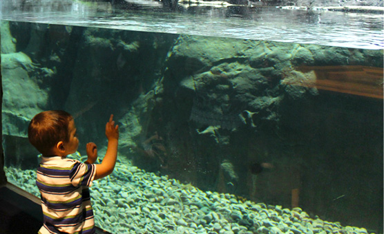 brockville-aquatarium-otter-habitat