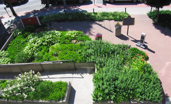 victory_gardens_top_view