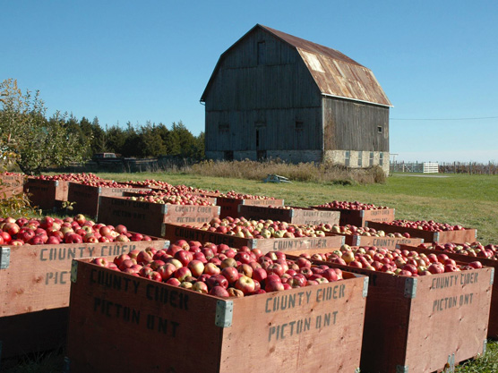 County Cider Company & Estate Winery Featured Image