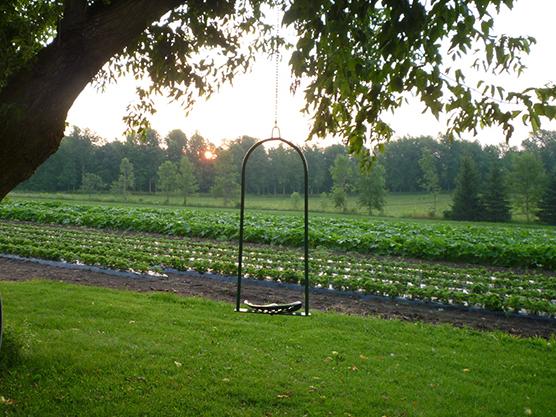 Tincap Berry Farm Featured Image