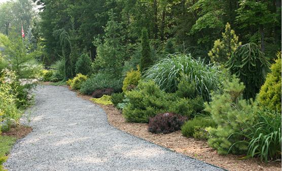 Rideau Woodland Ramble Featured Image