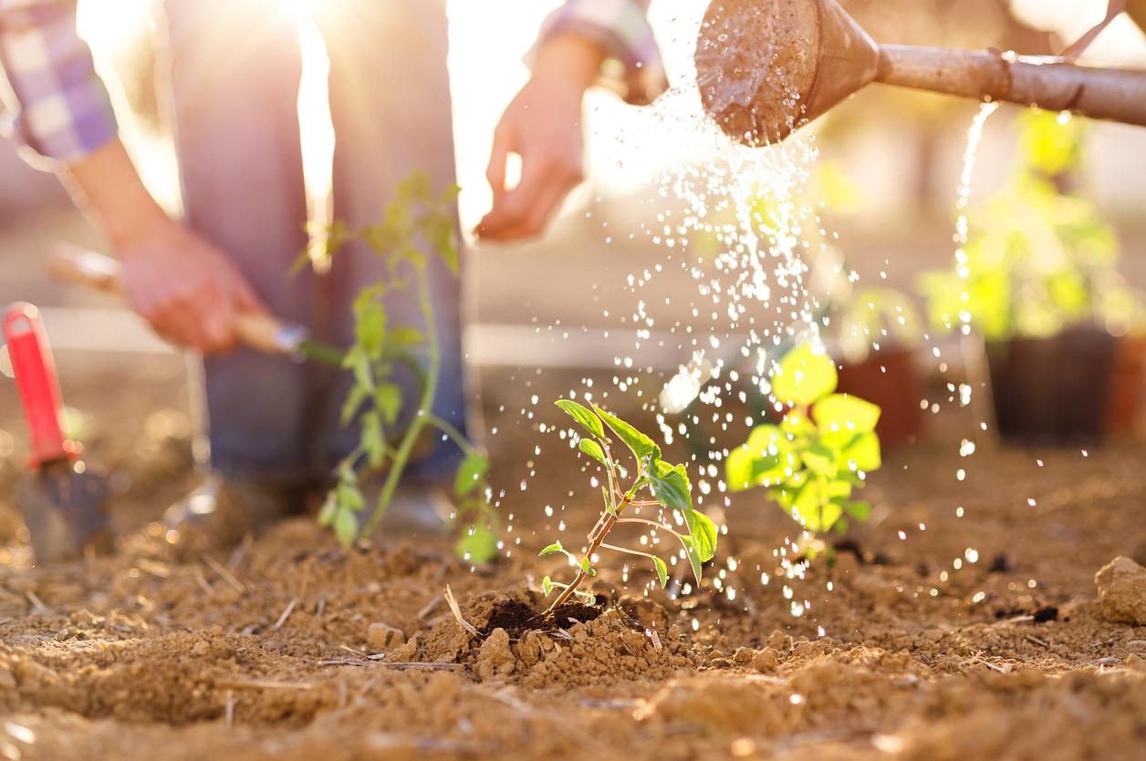 Littlejohn Farm Featured Image