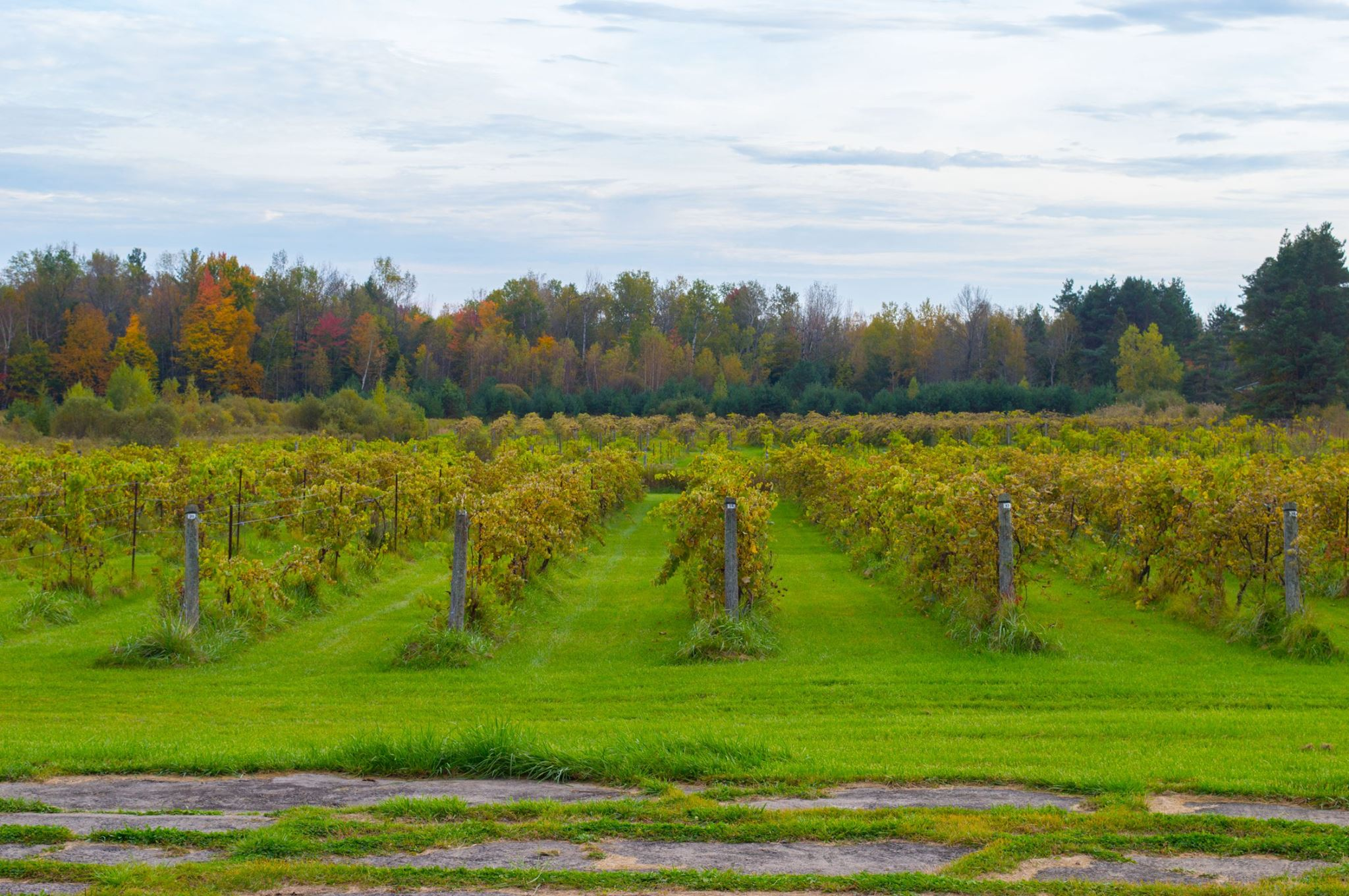 Green Gables Vines Featured Image